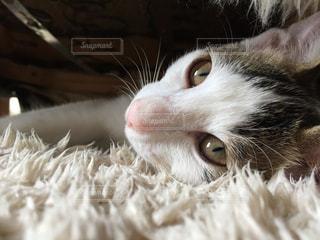 猫の写真・画像素材[687936]