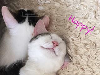 眠る猫の写真・画像素材[740539]