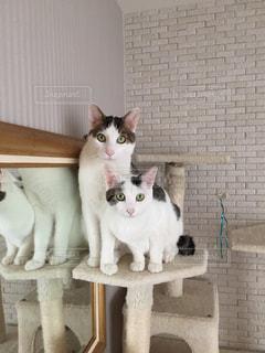 白い壁 座っている猫の写真・画像素材[1663041]