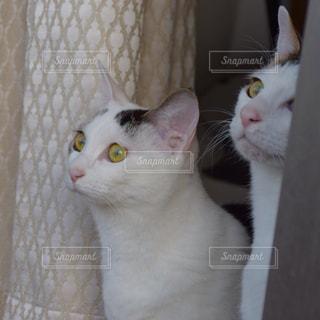 外を見る猫の写真・画像素材[1663056]