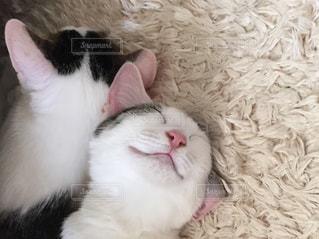 眠る猫の写真・画像素材[1663063]