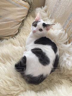 ベッドの上で横になっている猫の写真・画像素材[1663064]