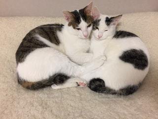 ベッドの上で横になっている白黒猫の写真・画像素材[1663065]