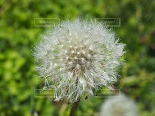 花の写真・画像素材[658965]