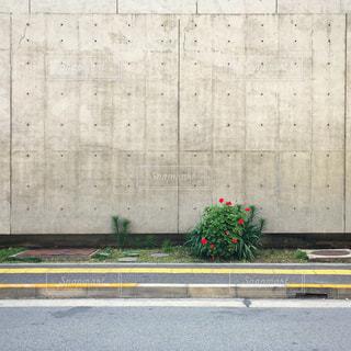花の写真・画像素材[661791]