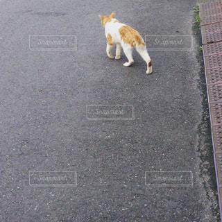 猫の写真・画像素材[681476]