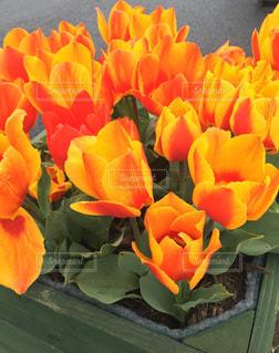 花の写真・画像素材[681550]