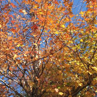 近くの木のアップの写真・画像素材[897870]