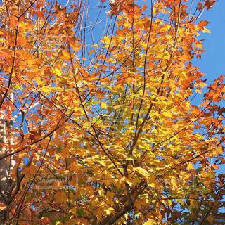 近くの木のアップの写真・画像素材[897871]