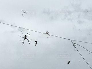 クモの巣の写真・画像素材[857366]