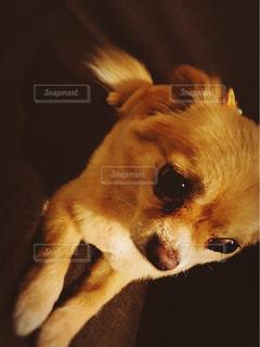 犬の写真・画像素材[661335]