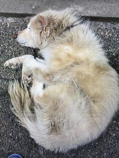 犬の写真・画像素材[660450]
