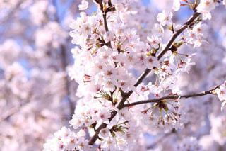 花の写真・画像素材[660376]
