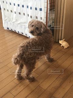床に座って犬 - No.959236