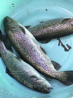 水面下を泳ぐ魚たち - No.959241