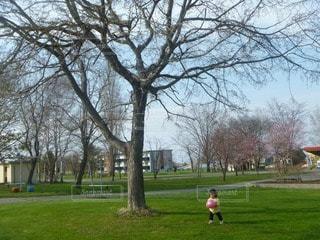 公園の写真・画像素材[24832]