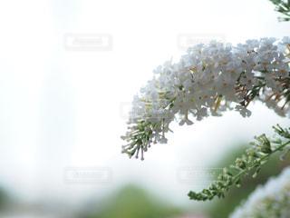 近くの花のアップの写真・画像素材[708296]