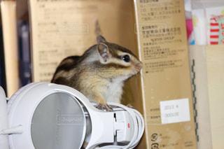 動物の写真・画像素材[661334]