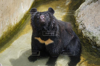 動物の写真・画像素材[661667]