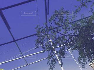 空の写真・画像素材[752760]