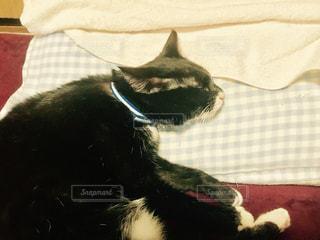 枕で眠るねこの写真・画像素材[803889]