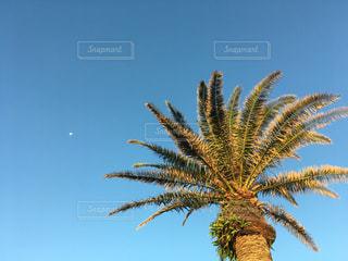 空の写真・画像素材[663256]