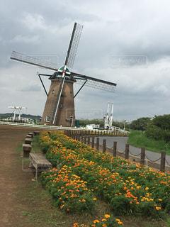 オランダ味わうの写真・画像素材[683261]