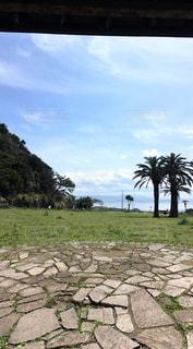 椰子日本の写真・画像素材[1226998]