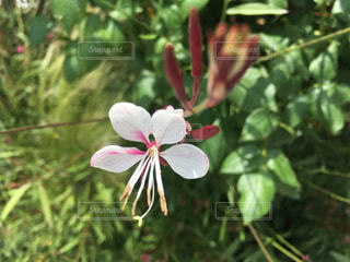 近くの花のアップの写真・画像素材[1234989]