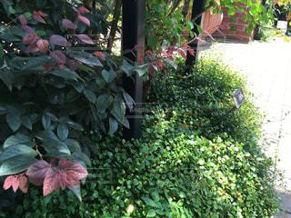 庭の植物の写真・画像素材[1234993]