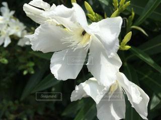 近くの花のアップの写真・画像素材[1271978]