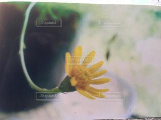 近くの花のアップの写真・画像素材[1295151]