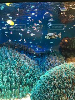 サンゴの水中ビューの写真・画像素材[1381225]