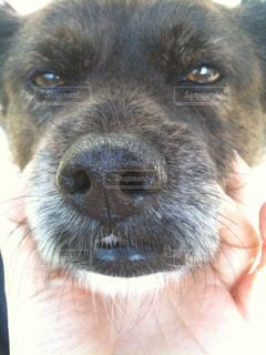 犬 - No.673136