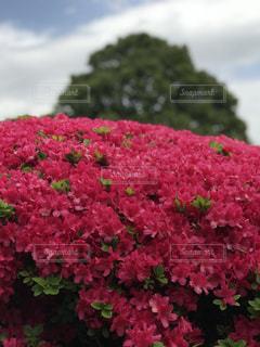 近くの花のアップの写真・画像素材[1258214]