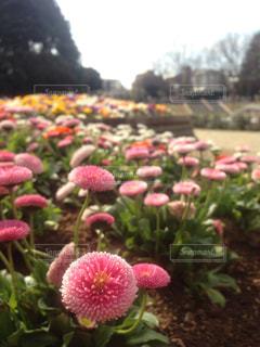 花の写真・画像素材[662919]
