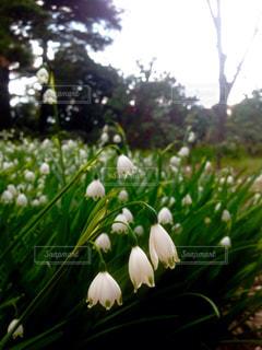花の写真・画像素材[662929]