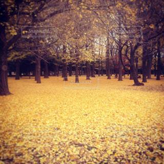 公園の写真・画像素材[662753]