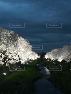 自然の写真・画像素材[663145]