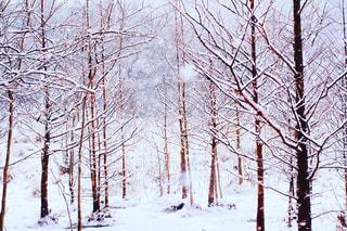 雪に覆われた木 - No.981653