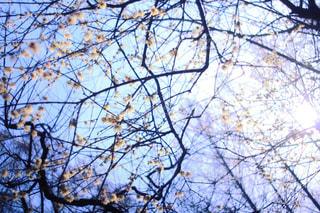 近くの木のアップの写真・画像素材[1002387]