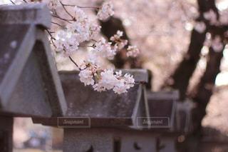 テーブルの上の花の花瓶の写真・画像素材[1128795]