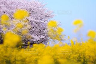 近くの花のアップの写真・画像素材[1128798]