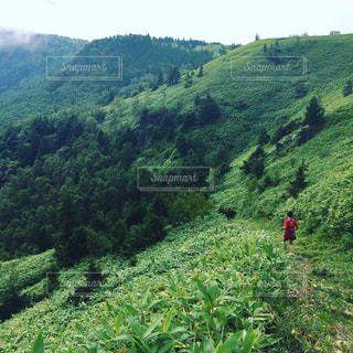 近くに緑豊かな緑の丘陵のアップ - No.715283