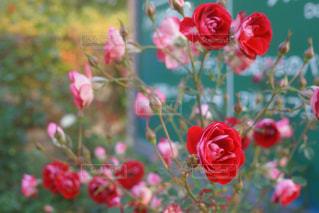 近くの花のアップの写真・画像素材[876764]