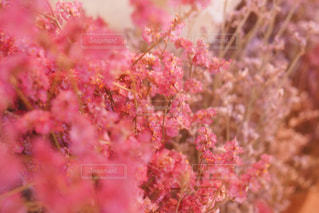 近くの花のアップの写真・画像素材[876767]