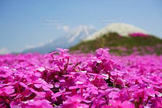 近くの花のアップ - No.880871