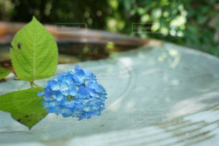 青い花とガラスの写真・画像素材[884588]