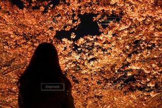 暗い森の人 - No.886677