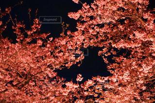 暗い部屋でツリーの写真・画像素材[886694]